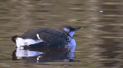 brun fugl med langt nebb